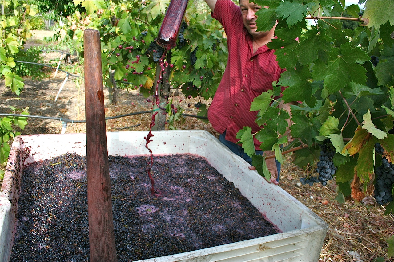 Rob Pressing Grapes